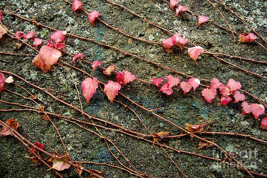 Autumn 8 by Elena Mussi
