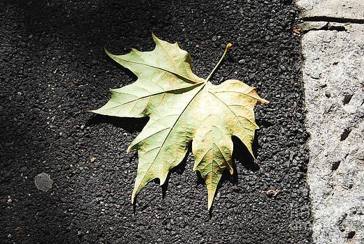 Autumn 9 by Elena Mussi