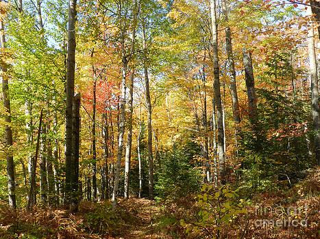 Autumn Afternoon in Michigan by Deborah Cummins