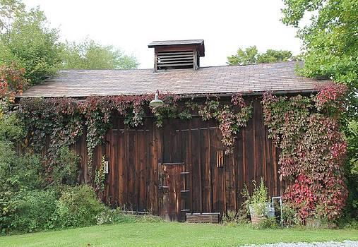 Autumn Antique Barn #2 by Donna Bosela