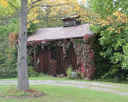 Autumn Antique Barn by Donna Bosela