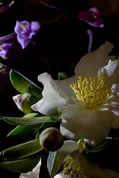 Autumn Bloom by Cindy Rubin