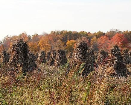 Autumn Corn by Donna Bosela