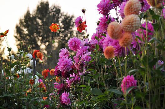 Autumn Flowers by Sarai Rachel