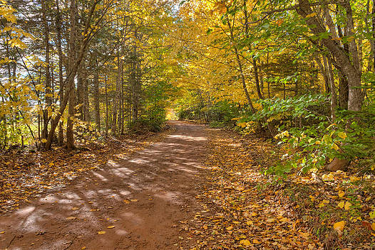 Matt Dobson - Autumn Foliage On A Country Road