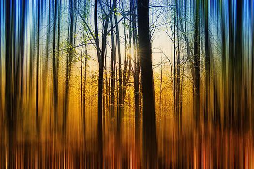Thomas Christoph - autumn forest