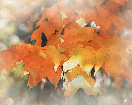 Terry Eve Tanner - Autumn Glory