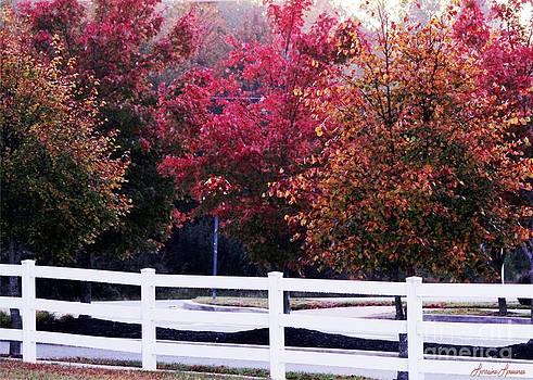 Autumn Has Returned by Lorraine Louwerse