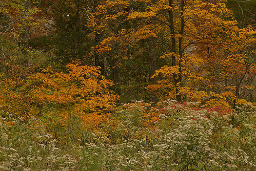 Autumn in Oklahoma by Katherine Worley