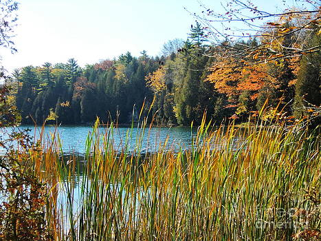Autumn in Ontario by Nina Nabokova
