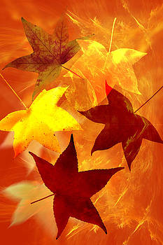 Autumn leaves by Carol and Mike Werner