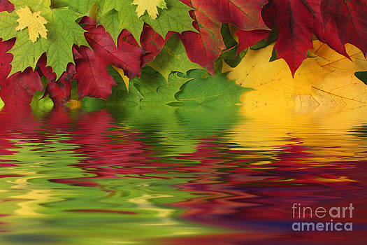 Simon Bratt Photography LRPS - Autumn leaves in water with reflection