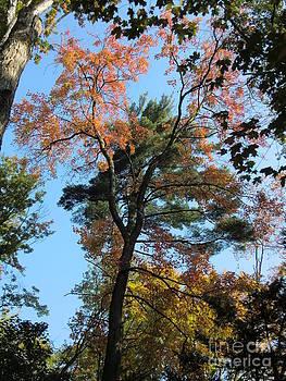 Autumn Lyrics  by Nina Nabokova