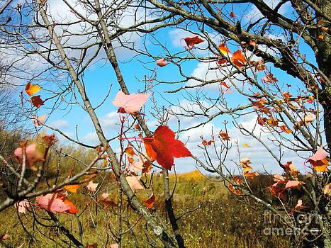 Autumn by Nina Nabokova