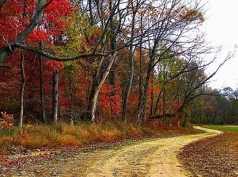 Julie Dant - Autumn on Bottomland Road