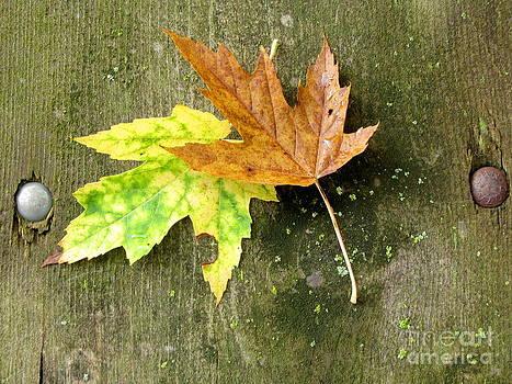 Marilyn Smith - Autumn Pair