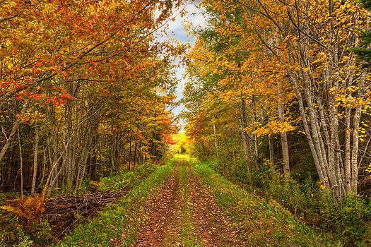 Matt Dobson - Autumn Path