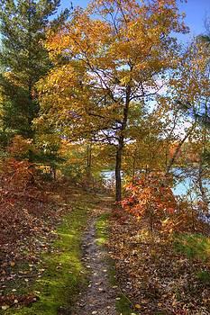 Autumn Path by Megan Noble
