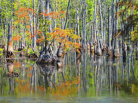 Autumn Reflections by Shannon Hill