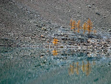 Autumn Reflectivity by Robert Goulet