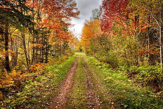 Matt Dobson - Autumn Road