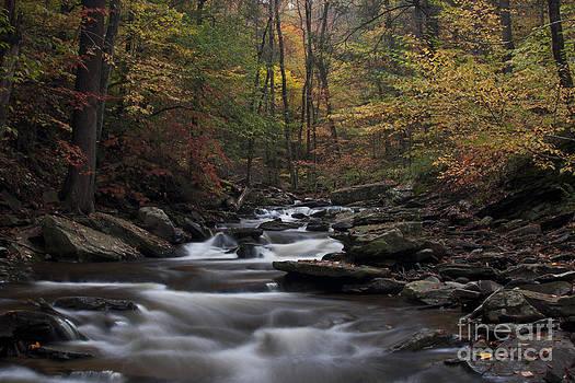 Autumn Stream brook at Ricketts Glen State Park by Robert Wirth