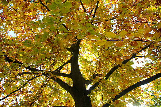 Autumn Sun by Karen Grist