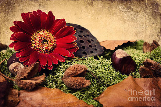Angela Doelling AD DESIGN Photo and PhotoArt - Autumn time