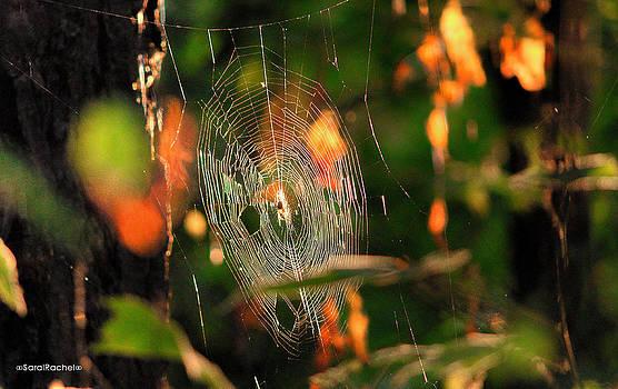 Autumn Web by Sarai Rachel