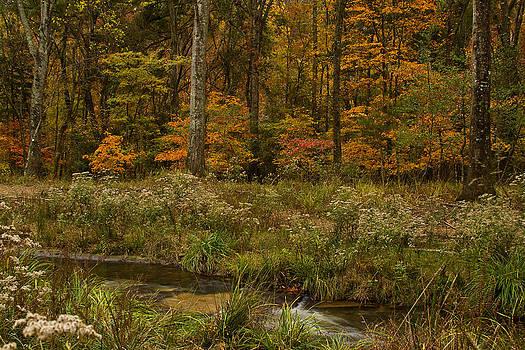 Autumn Woods by Katherine Worley