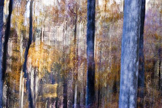 Autumnal feelings by Yuri Santin