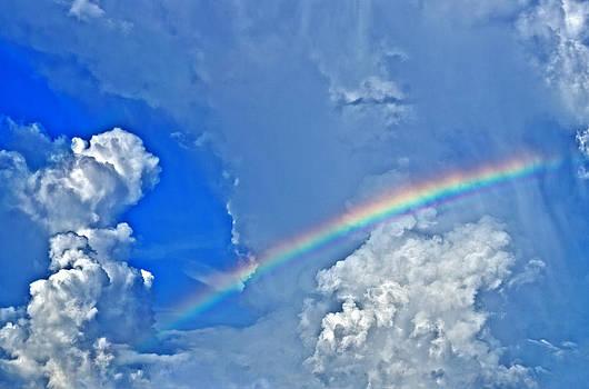 Azure Delight by Lawrence Ott