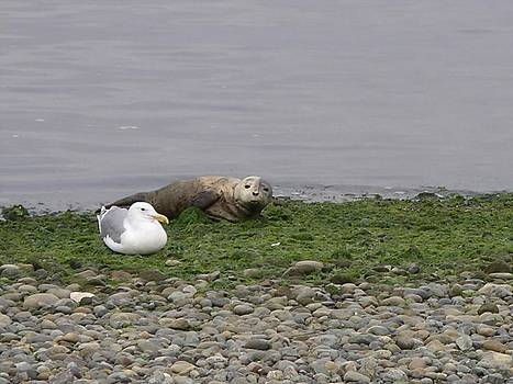 Baby Seal Babysitter by Monica Cranswick