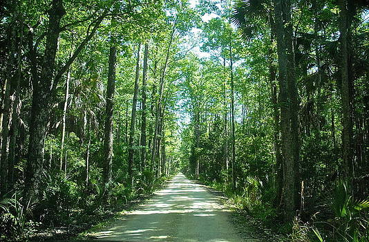 Backwoods Florida by Claire Pridgeon
