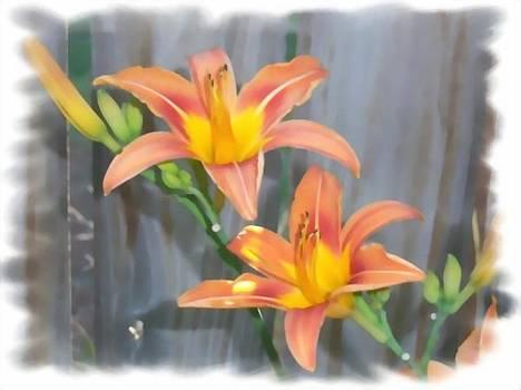Backyard Lilies by Jennifer Jeffris
