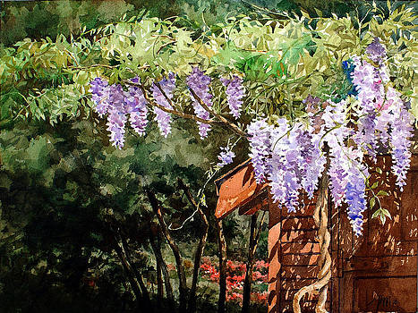 Backyard Wisteria by Peter Sit