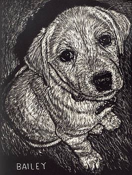 Bailey the Puppy by Robert Goudreau