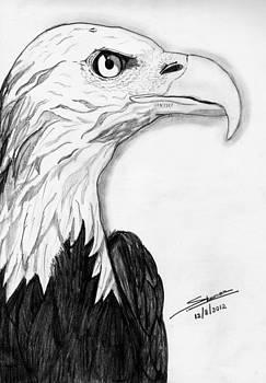 Bald Eagle by Shashi Kumar