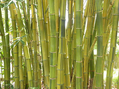 Bamboo by Anna Baker