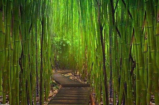 Bamboo Forest Japan by Sunkies Fang