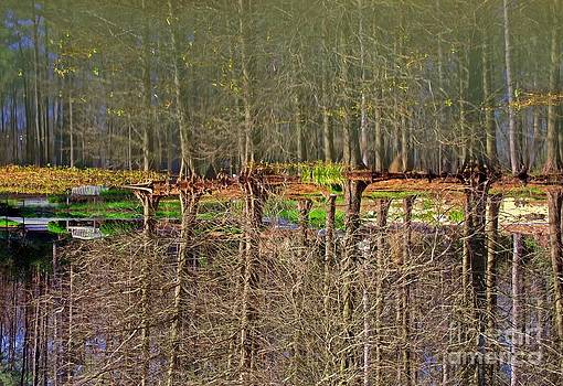 Bare Reflection-Upside Down by Shirley  Taylor