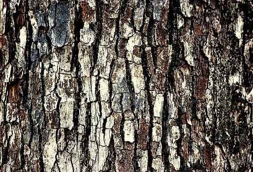 Bark by Manaswinee Mohanty