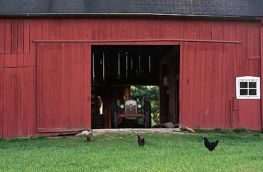 Barn and chicks by Cheryl Cencich