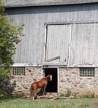 Barn and Horse by Kristine Bogdanovich
