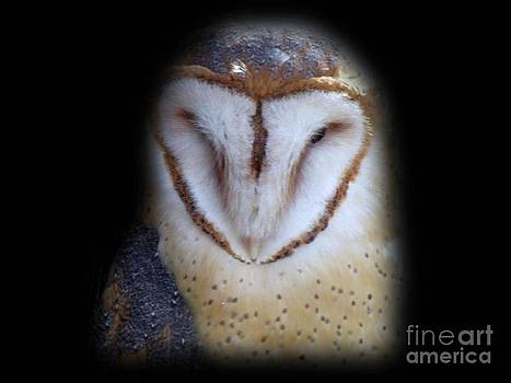 Barn Owl by Donna Parlow