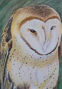 Barn Owl by Jennifer Jeffris