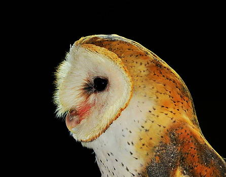 Ramona Johnston - Barn Owl Profile