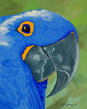 Basilio the Blue Parrot by John  Sweeney