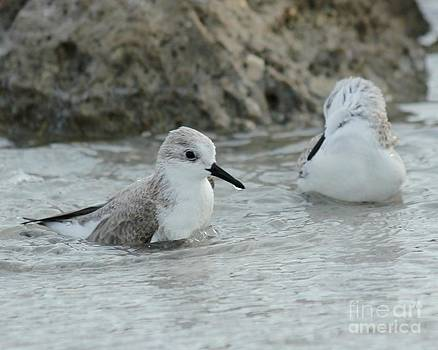Bath Time at the Beach by Theresa Willingham