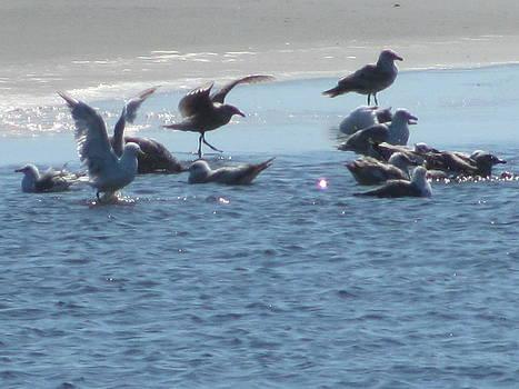 Bathing Gulls by Gregory Smith